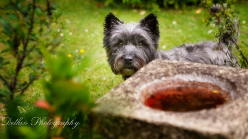 dogs, pet photography in Bishops Stortford, Herts, Essex. Nervous, fearful, specialist