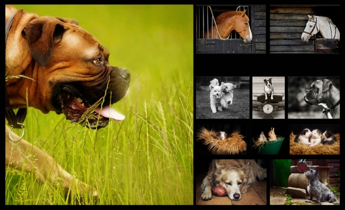Detheo Photography dogs, cats, horses, rabbits, hamsters, Pet photography