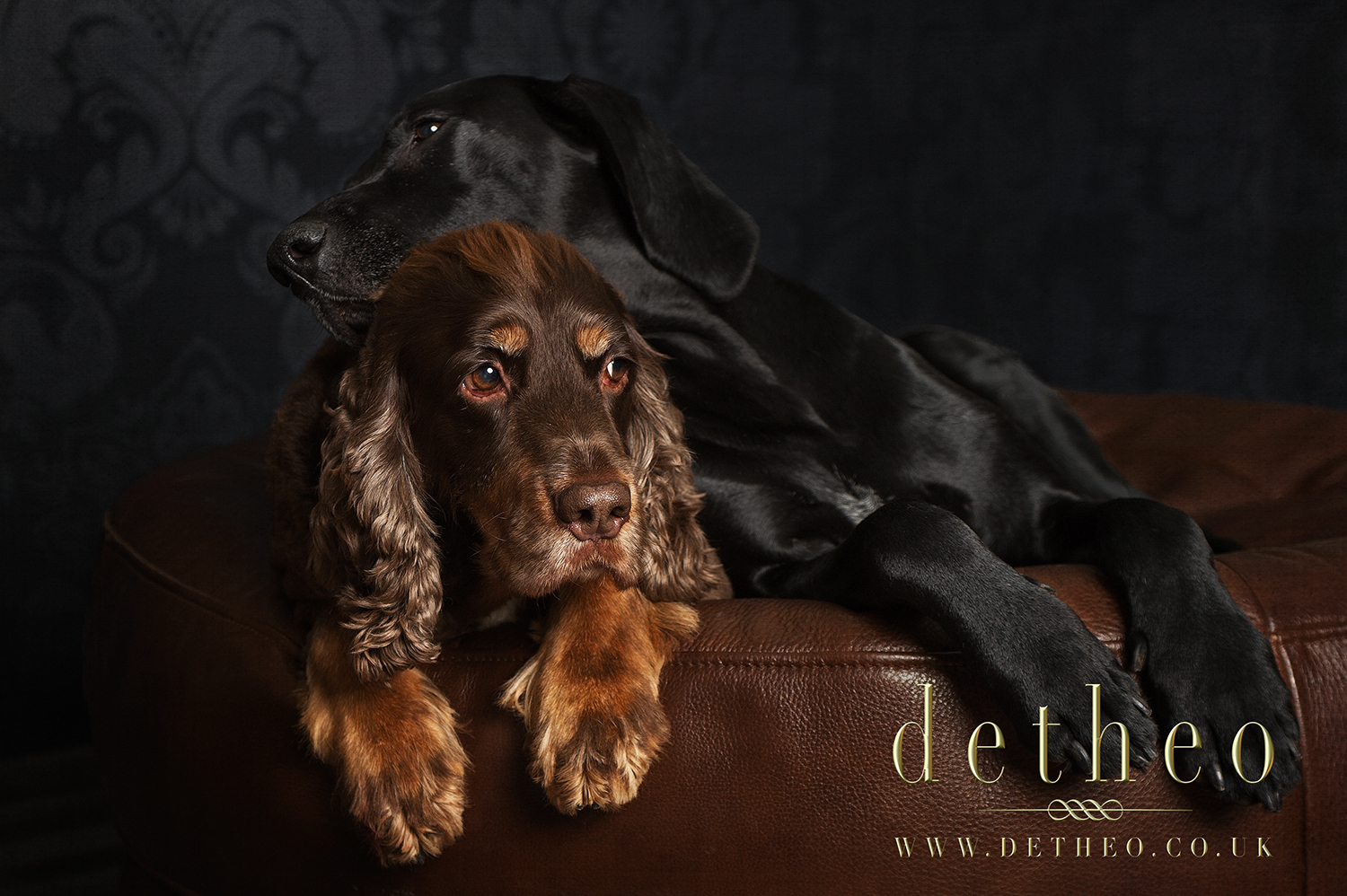 Specialist Pet photography photoshoot for dogs Samson & Sadie. Captured by Pet photographer, Detheo Photography